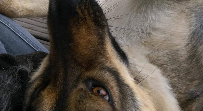 Liebervoller Umgang mit Herzblut :), Hundesitter in Bonn