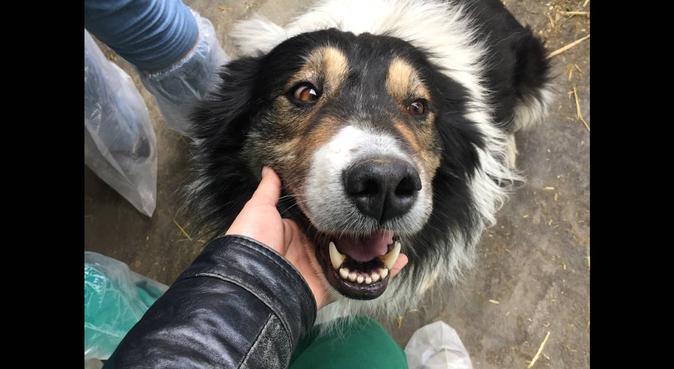 Tante coccole con una studentessa di veterinaria, dog sitter a Parma