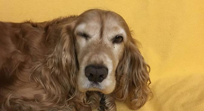 Dog-sitter promenades parcs et forêt, dog sitter à Marseille