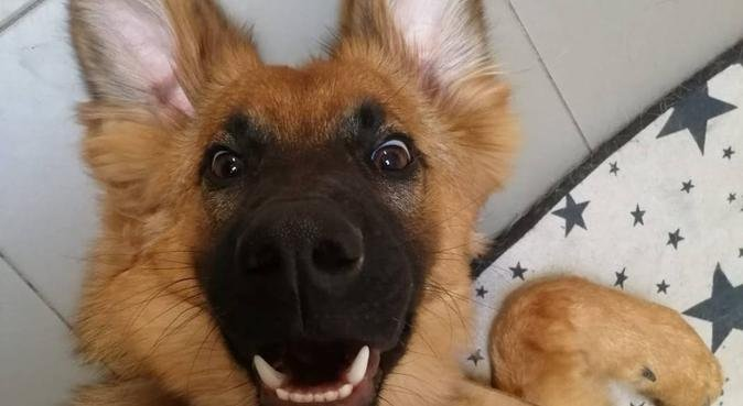 Amante dei cani, preparata e con esperienza, dog sitter a Perugia