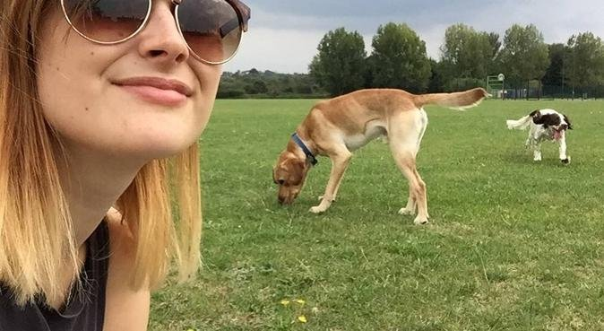 Dog walker who is dog mad!, dog sitter in Broxbourne