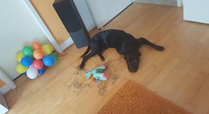 Hundesitter mit Herz & Geduld, Hundesitter in Dresden
