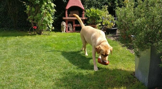 Doggie Holiday in rural village near to Maidstone, dog sitter in Eccles