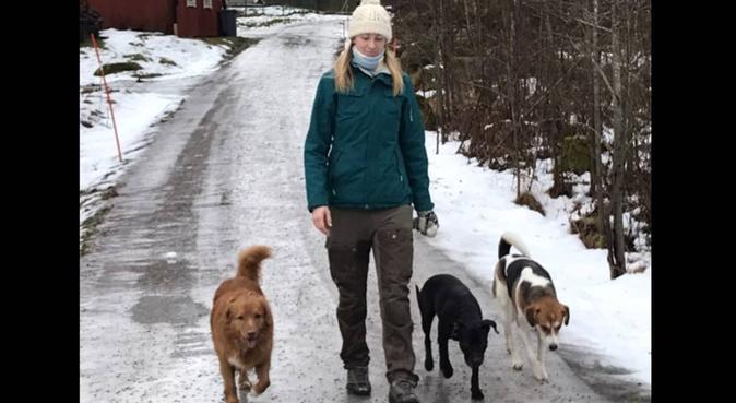 Hundkompis finns i Uppsala och Sthlm!, hundvakt nära Björklinge