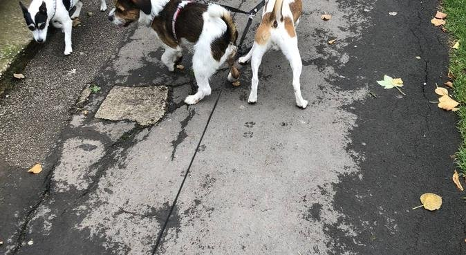 WALKIES!, dog sitter in wigan