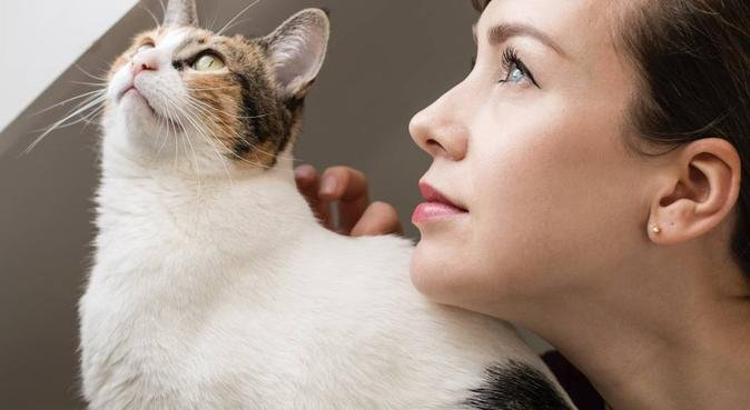 Chester Pet Services, The Care Your Pet Deserves, dog sitter in Chester