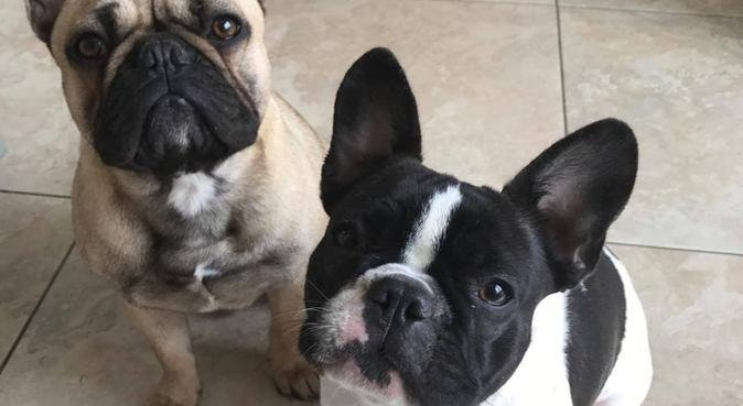 A Furry-Tail Service, dog sitter in Hereford