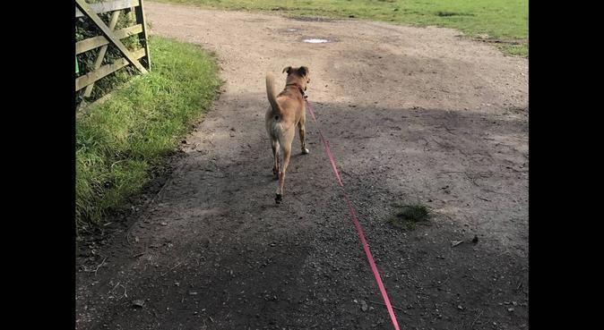 Dog's heaven & walks, dog sitter in Hemel Hempstead