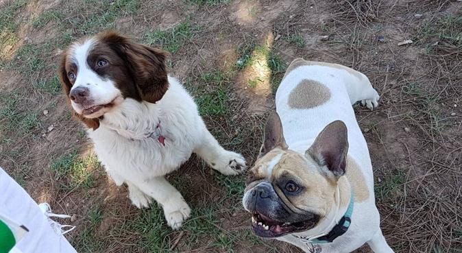 Paseadora y cuidadora de perros, canguro en Paterna