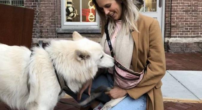 Dog lover in Amsterdam Noord, hondenoppas in Amsterdam