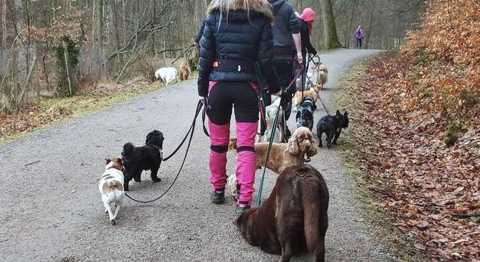 Rolig och kärleksfull hundpassning, hundvakt nära Göteborg