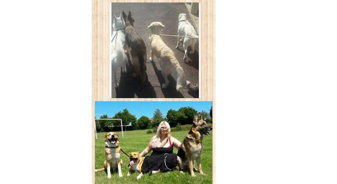 De l'amour pour vos boules de poil, dog sitter à Rennes, France