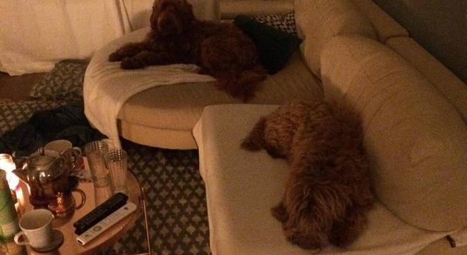 Vrolijk- en liefdevol stelletje - dol op jouw hond, hondenoppas in Arnhem