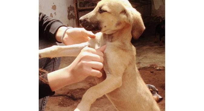 Lina, étudiante, passionnée par les chiens, dog sitter à Bordeaux