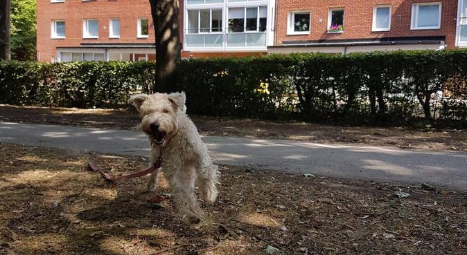 Nystartare som genuint uppfyller din hunds behov!, hundvakt nära Alnö, Sverige