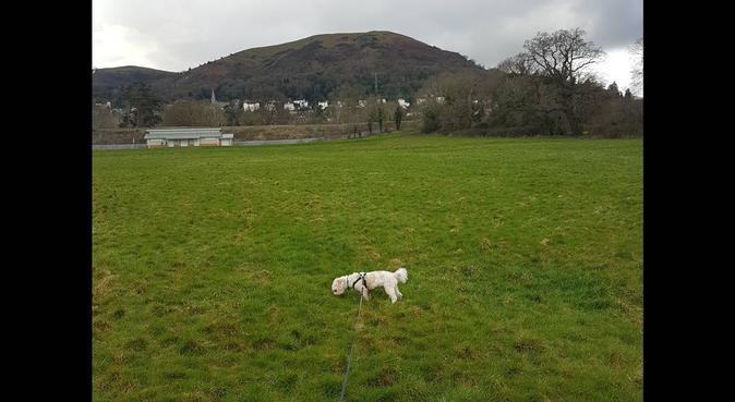 Countryside Pet Carer, dog sitter in Malvern