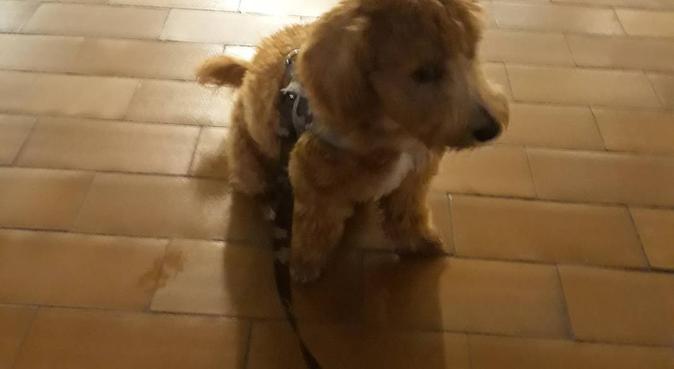 Passeggiate e coccole con il dogsitter delle Terme, dog sitter a Montegrotto Terme