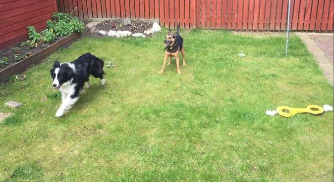 Doggy couple with tons of experience and love, dog sitter in Coatbridge