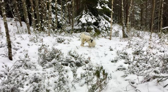 Turglad jente søker firbeint turkompis, hundepassere i Oslo