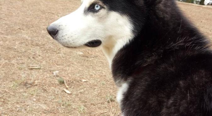 Paraíso de confianza para tu/s perro/s, canguro en San Fructuoso de Bages