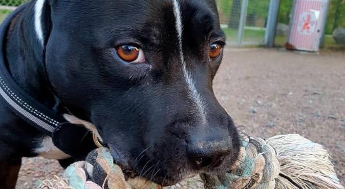 Hundpassning i Göteborg med stor erfarenhet, hundvakt nära GÖTEBORG