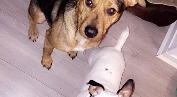 Câlins à volontés avec copain de jeux, dog sitter à Toulouse