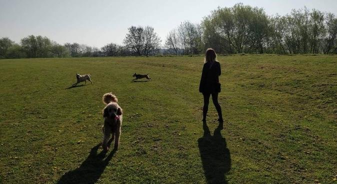 Walking, Boarding and Sitting in Nottingham, dog sitter in Nottingham