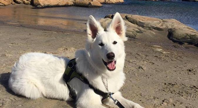 Ut på tur, aldri sur!, hundepassere i Nodeland