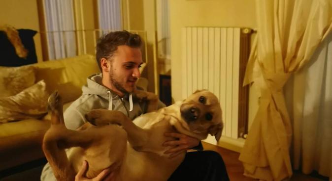 Belle passeggiate, tante coccole e divertimento, dog sitter a Parma, PR, Italia