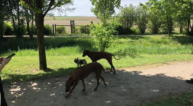 au bonheur des animaux, dog sitter à Mundolsheim