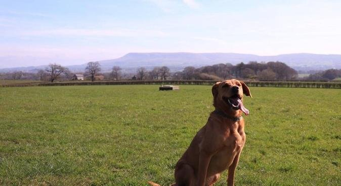 Pawz for Thought - Dog walking and Boarding, dog sitter in Preston