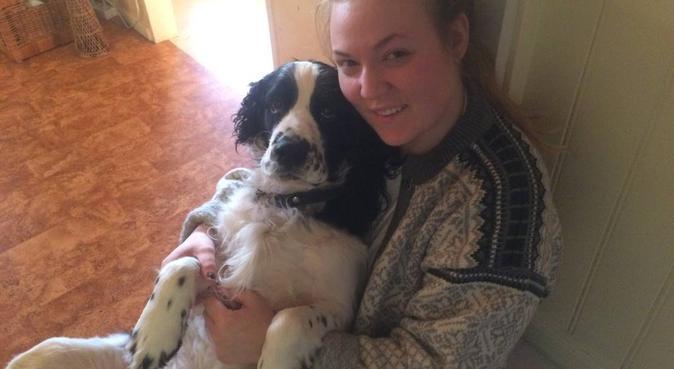 Kärleksfull hundpassning i Salem, hundvakt nära Rönninge