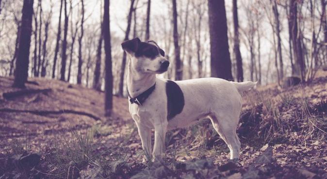 Experienced dog walker in Charlottenburg, Hundesitter in Berlin, Germany