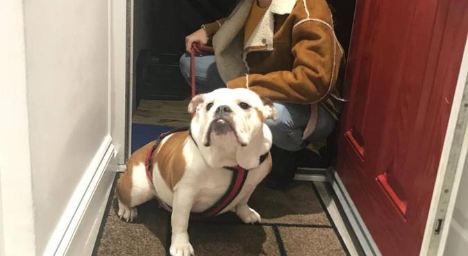 Cozy Doggo Sitting, dog sitter in Bournemouth, UK