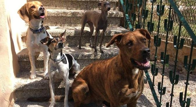 COUNTRYSIDE VACATION FOR DOGS, canguro en Palma-de-Mallorca