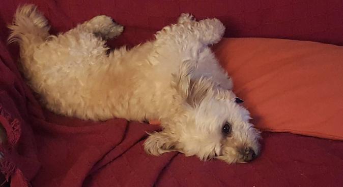 Cuidado para tu perro con mucho cariño en Alicante, canguro en Alicante