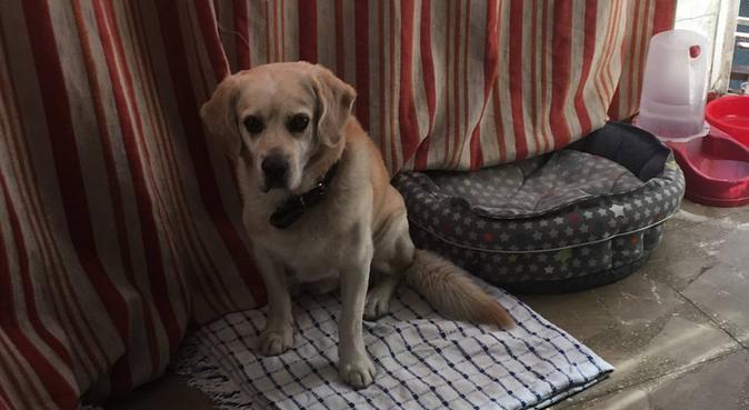 Adiestradora y peluquera canina!, canguro en Sevilla