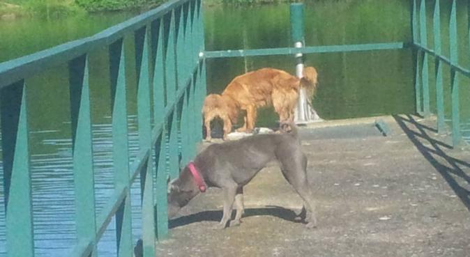 Repos à la campagne ! et remise en forme......, dog sitter à st jean de beauregard