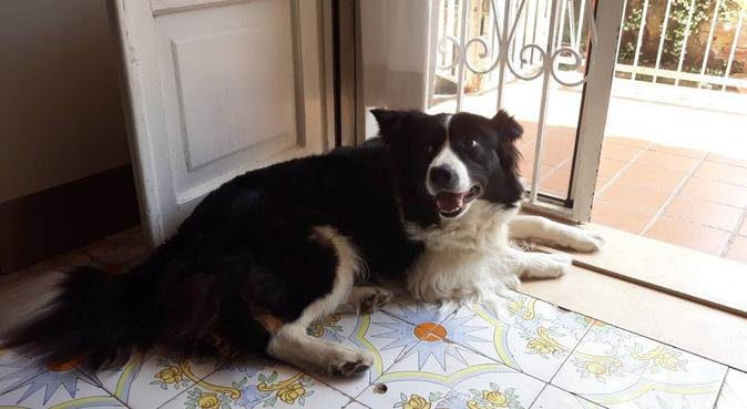 Dog sitter veterinaria per cani con esigenze speci, dog sitter a Bacoli