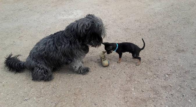 Casa de campo para cuidar perritos :), canguro en Elche