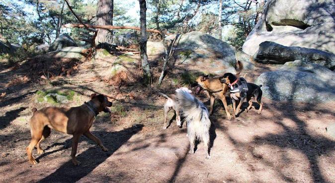 Le paradis des chiens et des câlins chez moi, dog sitter à Antony