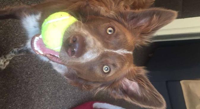 Walker, cuddler and passionate dogsitter, dog sitter in York