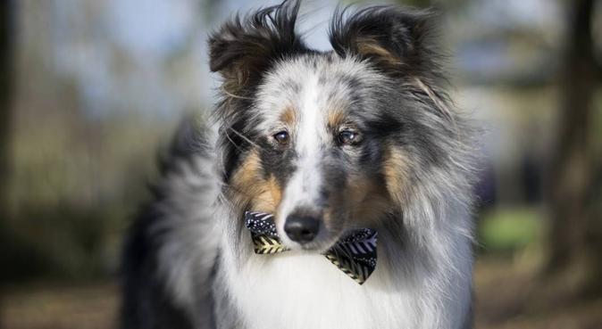 Passionnée par le monde canin 😁, dog sitter à Pacé, France