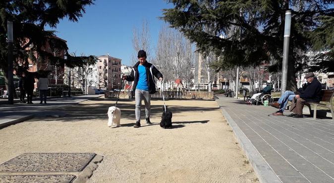 Paseo de peludos, Por amor a los más consentidos, canguro en Mataró, España