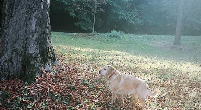 Passeggiate nei parchi e tante coccole, dog sitter a Bologna, BO, Italia