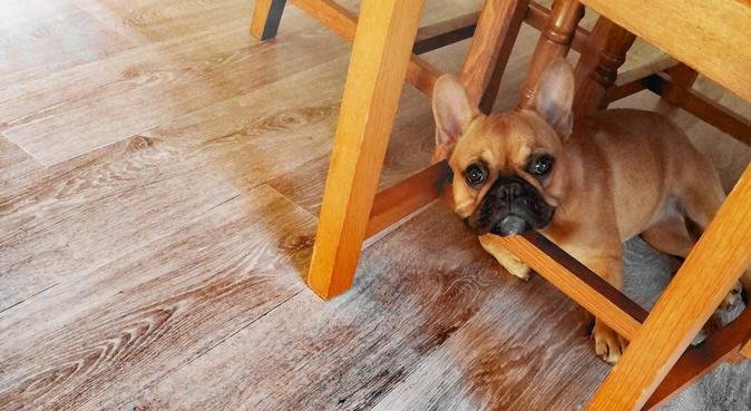 Dog Sitter TOURCOING 🐶, dog sitter à Tourcoing