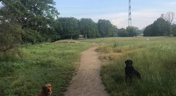 Liebevolle Hundebetreuung in Eving direkt am Wald, Hundesitter in Dortmund