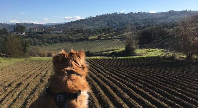 Soggiorno, Passeggiate e tante coccole, dog sitter a Florence