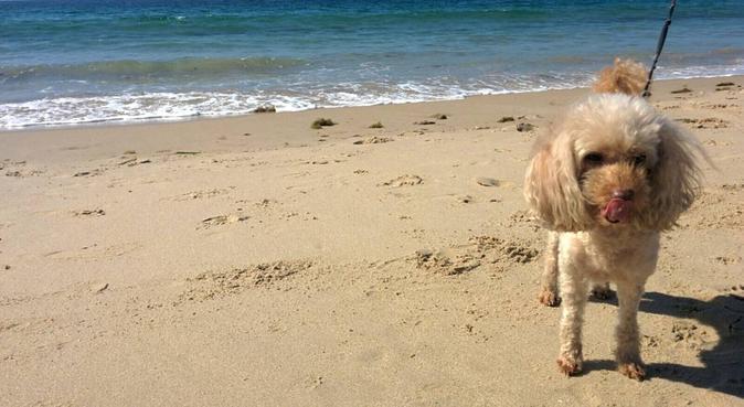 🐶¡Haz que tu peludo se sienta como en casa!, dog sitter in Algeciras