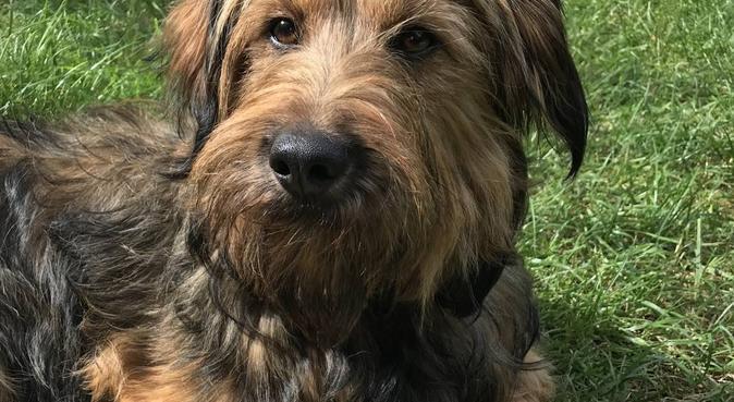 Mijn passie voor honden, hondenoppas in Den Haag
